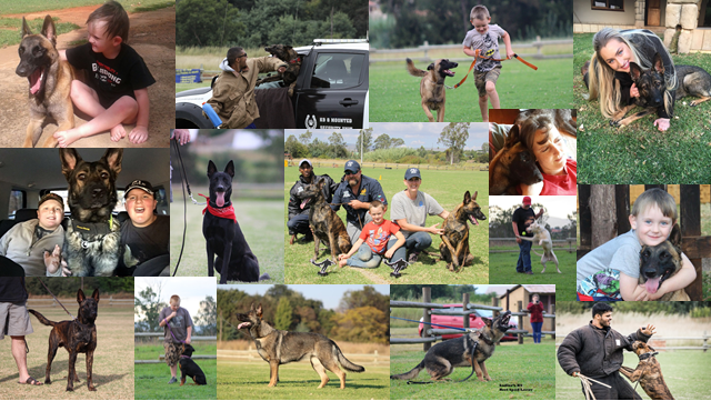 Working dogs, personal protection dogs, Johannesburg South Africa