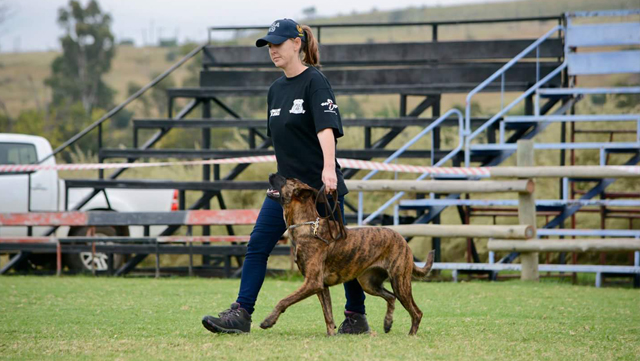 Johannesburg, South Africa - Working dogs, personal protection dogs, detection dogs, tracking dogs, protection, green dogs, anti- poaching and even sports dogs
