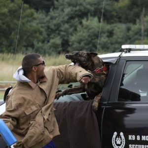Johannesburg, South Africa, Dutch Shepherd Protection Dogs