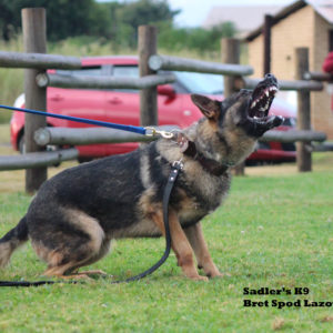 Imported German Shepherd Breeding & Protection